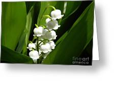 Lily Of The Valley 1 Greeting Card