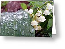 Lily Of The Valley After The Rain Greeting Card