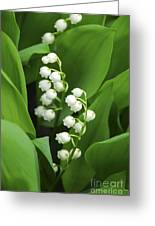 Lily-of-the-valley  Greeting Card