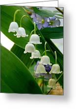 Lily Of The Valley Green Greeting Card