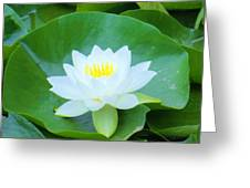 Lily On Its Pad Greeting Card