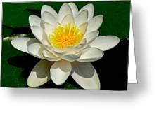 Lily Pad Blossom Greeting Card
