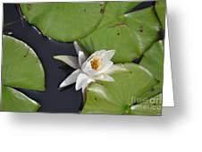 Lily Pad Greeting Card