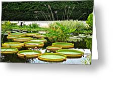 Lily Pad Garden Greeting Card