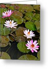 Lily Pad Haven Greeting Card