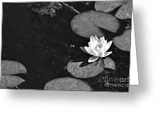 Lily Pad In Bloom Greeting Card