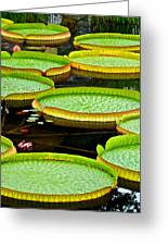 Lily Pad Pond Greeting Card