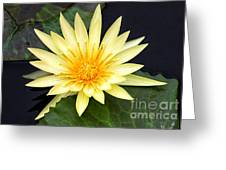 Lily Pad Yellow Greeting Card