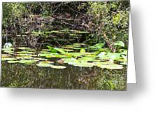 Lily Pads 1 Greeting Card