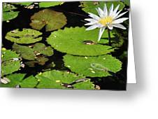 Lily Pads And Lotus Flower Greeting Card