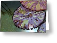 Lily Pads And Papyrus Reflection Greeting Card