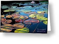 Lily Pads At Sunset Greeting Card by Kaye Menner