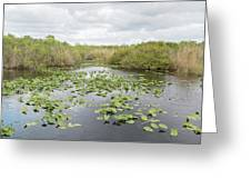 Lily Pads Floating On Water, Anhinga Greeting Card