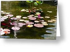 Lily Pads In The Fountain Greeting Card