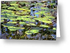 Lily Pads In The Swamp Greeting Card