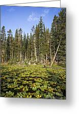 Lily Pads On Isa Lake Greeting Card