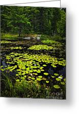 Lily Pads On Lake Greeting Card