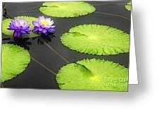 Lily Pads Purple Greeting Card