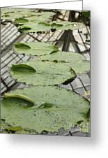 Lily Pads With Reflection Of Conservatory Roof Greeting Card