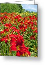 Lily Patch Greeting Card