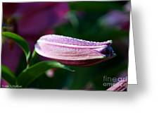 Lily Pearls Greeting Card