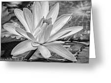 Lily Petals - Bw Greeting Card