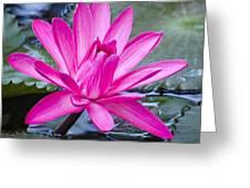 Lily Petals Greeting Card