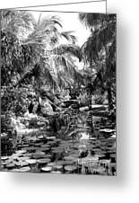 Lily Pond Bw Greeting Card