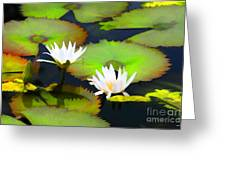 Lily Pond Bristol Rhode Island Greeting Card