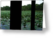 Lily Pond Tri Panel A Greeting Card