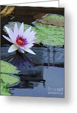 Lily Purple And White Greeting Card