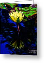 Lily Reflection Greeting Card by Nick Zelinsky