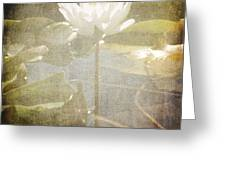 Lily Reflections Greeting Card