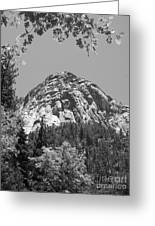 Lily Rock In Black And White Greeting Card