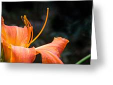 Lily Showing Pistil And Anthers Greeting Card