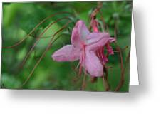 Lily Slide Greeting Card