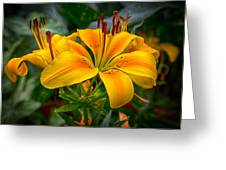 Lily Sunshine Greeting Card