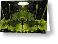 Lily Symmetry  Greeting Card by Elery Oxford