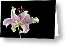 Lily Up Close Greeting Card
