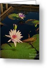 Lily White Monet Greeting Card