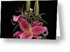 Lily With Buds Greeting Card