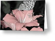 Lily With Butterly  Greeting Card