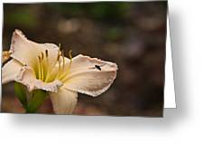 Lily With Fly Greeting Card