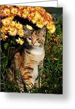 Lily With Harvest Mums Greeting Card