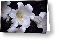 Lily With Rain Droplets Greeting Card