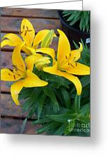 Lily Yellow Flower Greeting Card
