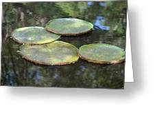 Lilypad Quads Greeting Card