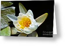 Lilypad Greeting Card