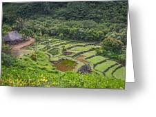 Limahuli Garden Kauai Greeting Card