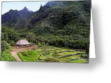 Limahuli Taro Fields In Kauai Greeting Card